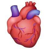 emoji de coração anatômica na versão para WhatsApp