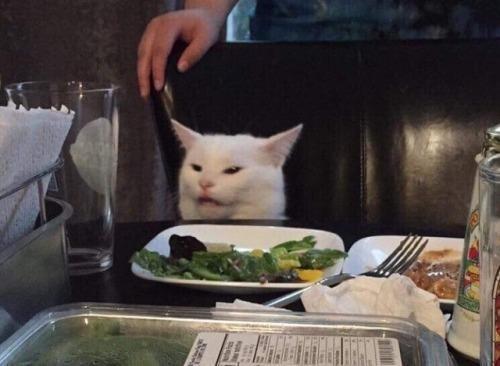 gato confuso