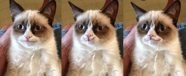 Grumpy Gat