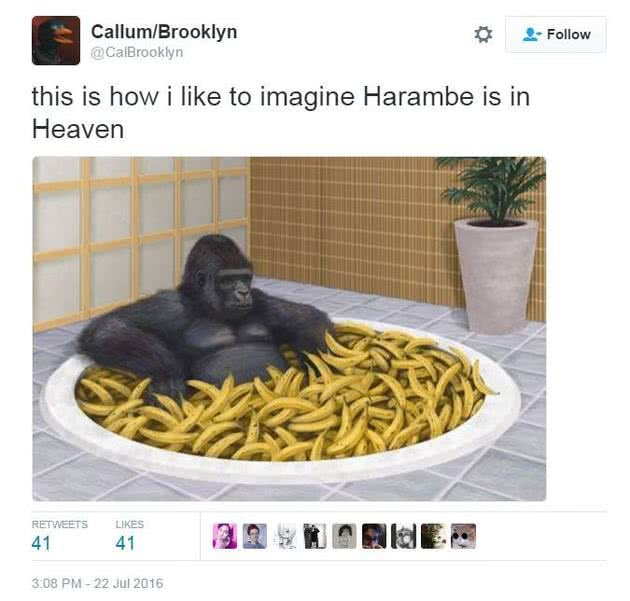 harambe meme
