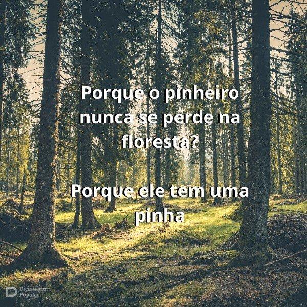 Trocadilhos engraçados sobre uma floresta de pinheiros