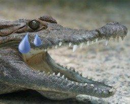 Lagrimas de crocodilo
