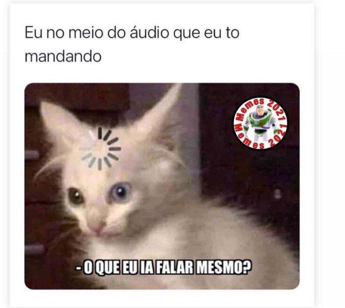 Meme com gato  confuso
