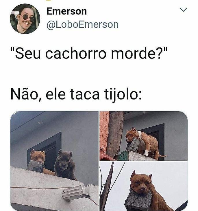Meme seu cachorro morde?