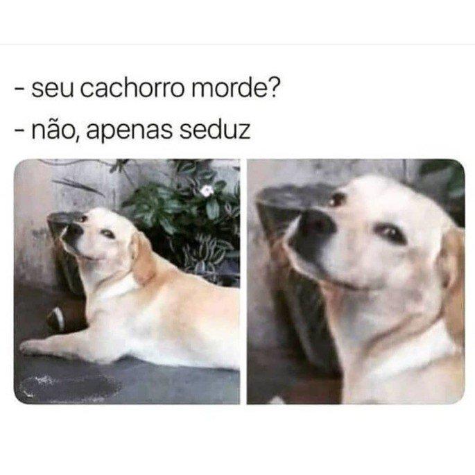 Meme cachorro seduzindo