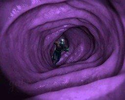 Memes do Homem Formiga e Thanos
