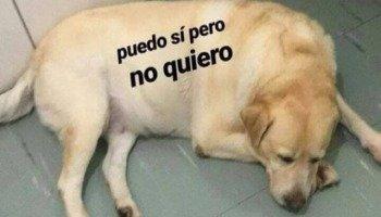 No puedo estoy gordito y cansadito: o meme dos cachorros falando espanhol
