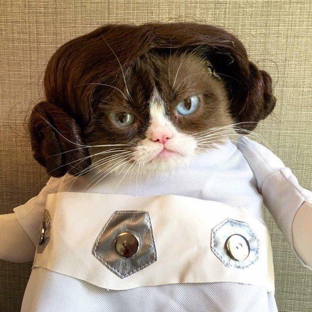 Grumpy Cat princesa Leia